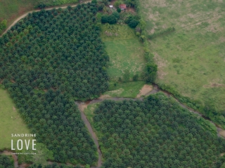 Costa Rica 2006 59