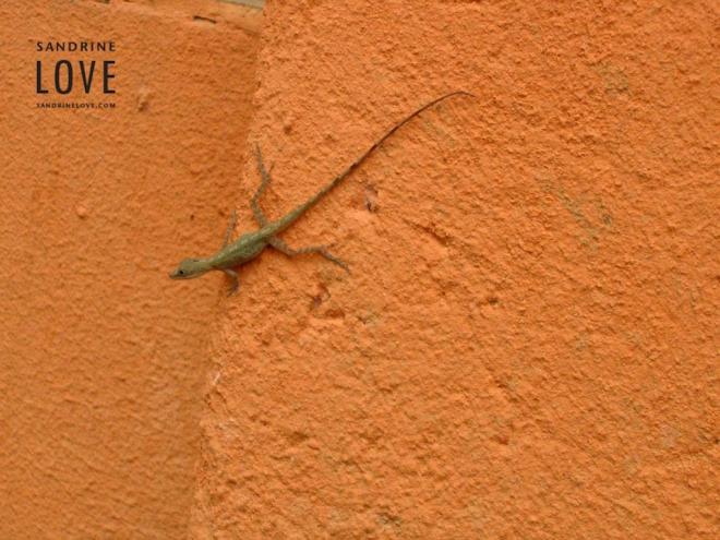 Costa Rica 2006 97